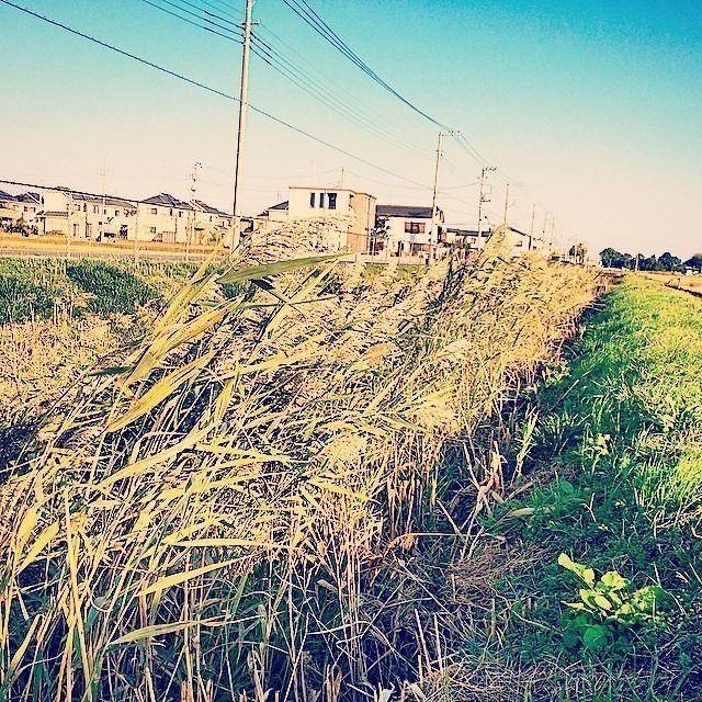 菅間の田園風景